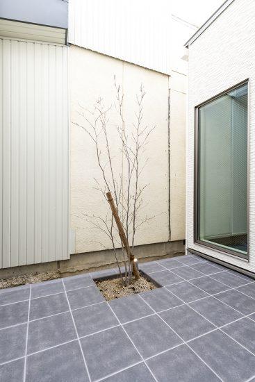 名古屋市北区の注文住宅の木が植えられた中庭の新築写真